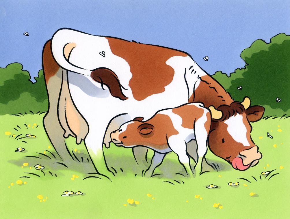 lustration jeunesse-Les animaux de la ferme-Vache et veau