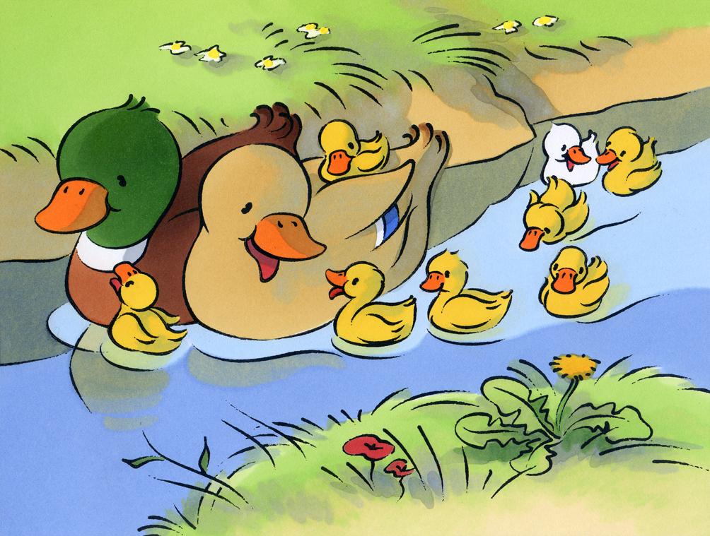 illustration jeunesse-les animaux de la ferme-Canards et poussins