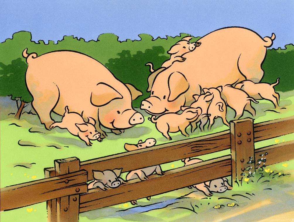 Illustration jeunesse-les animaux de la ferme-Cochons et cochonnets